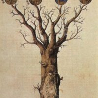 Alchemical Tree, Pseudo-Lull